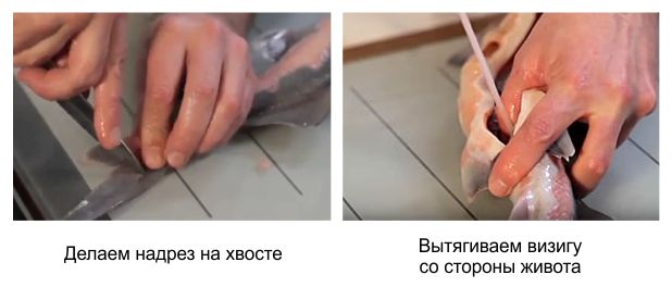 Как почистить стерлядь в домашних условиях пошаговый рецепт