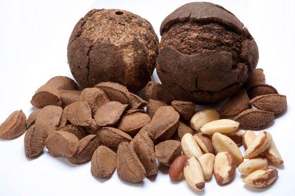 бразильский орех фото плода