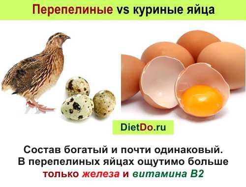 чем полезны перепелиные яйца и как их употреблять