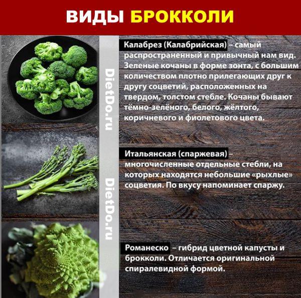 капуста брокколи сорта и виды