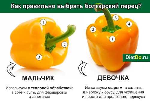Болгарский перец  польза и вред для здоровья сладкого овоща