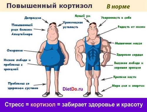 как влияет кортизол на организм человека