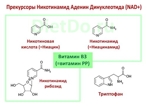 никотинамид рибозид свойства